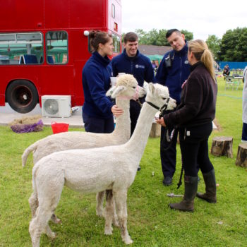 Cumbria Fire and Rescue meet Blencogo Farm Alpacas