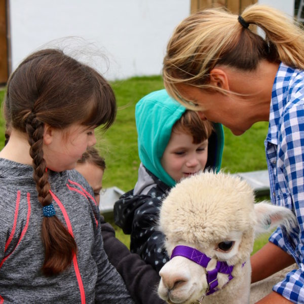 Alpaca Chat during a Blencogo Farm Visit
