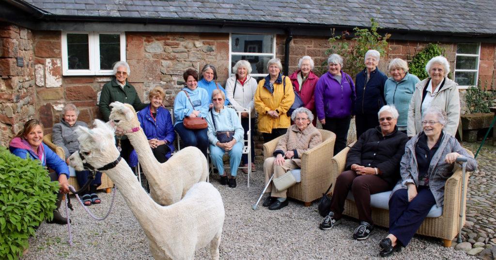 Group Alpaca Visit