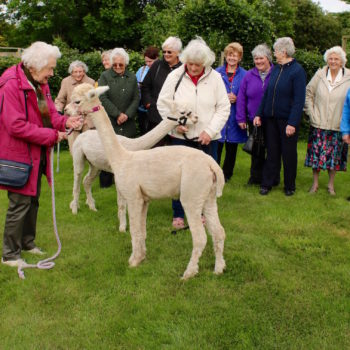 Great Orton WI with Alpacas